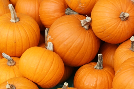 Bake_these_pumpkins_in_Toronto
