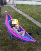 boy in hammock with dog